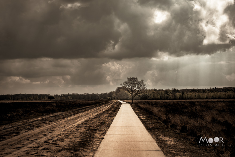 Woordloze Woensdag Eindeloze Weg Dwingelderveld