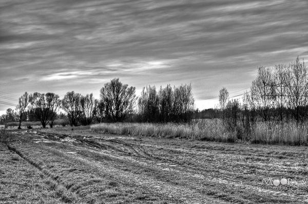 Woordloze Woensdag Biesbosch HDR Zwart Wit
