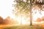De Wondere Wereld van Bomen