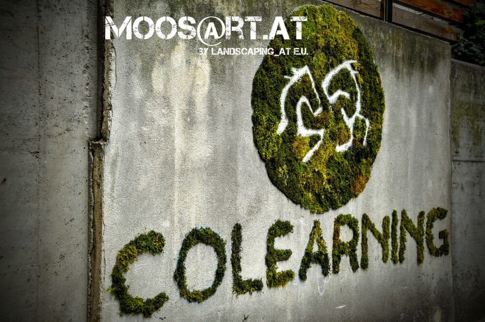 Moosgraffi_Colearning_moosart