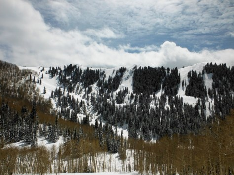 The backcountry comes to life again after some fresh snow.
