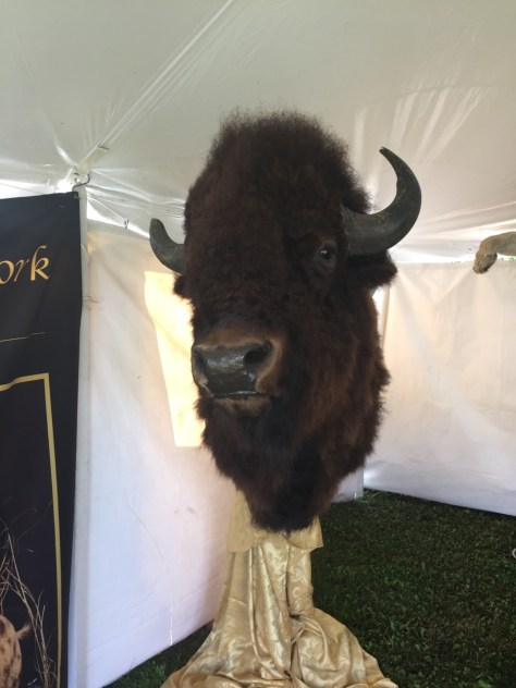 Bison head at the Orvis Game Fair.