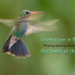 Celebrating Flight – Photographing Hummers, the video