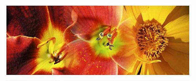 pollen træ sædceller