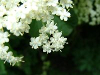 1000+ images about White flower power on Pinterest