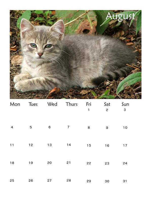 2014 Best Cat and Dog Calendars