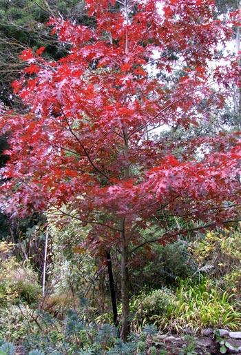 The Oak Tree Path