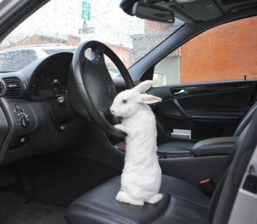 driving-rabbit