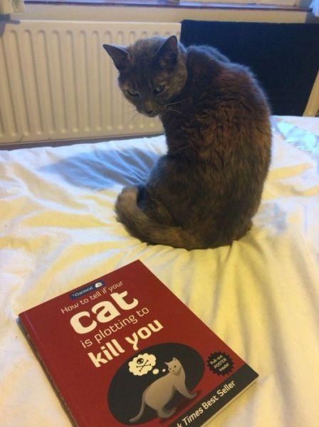 cat-plotting