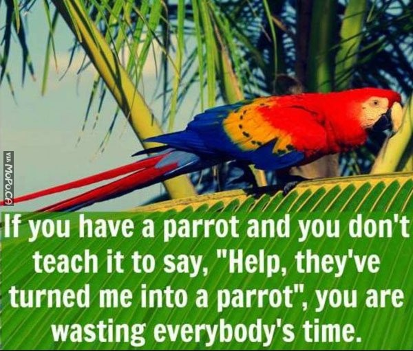 Every Parrot Owner Needs To Do This Now