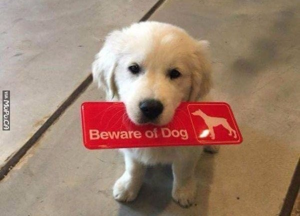 Beware of Cute