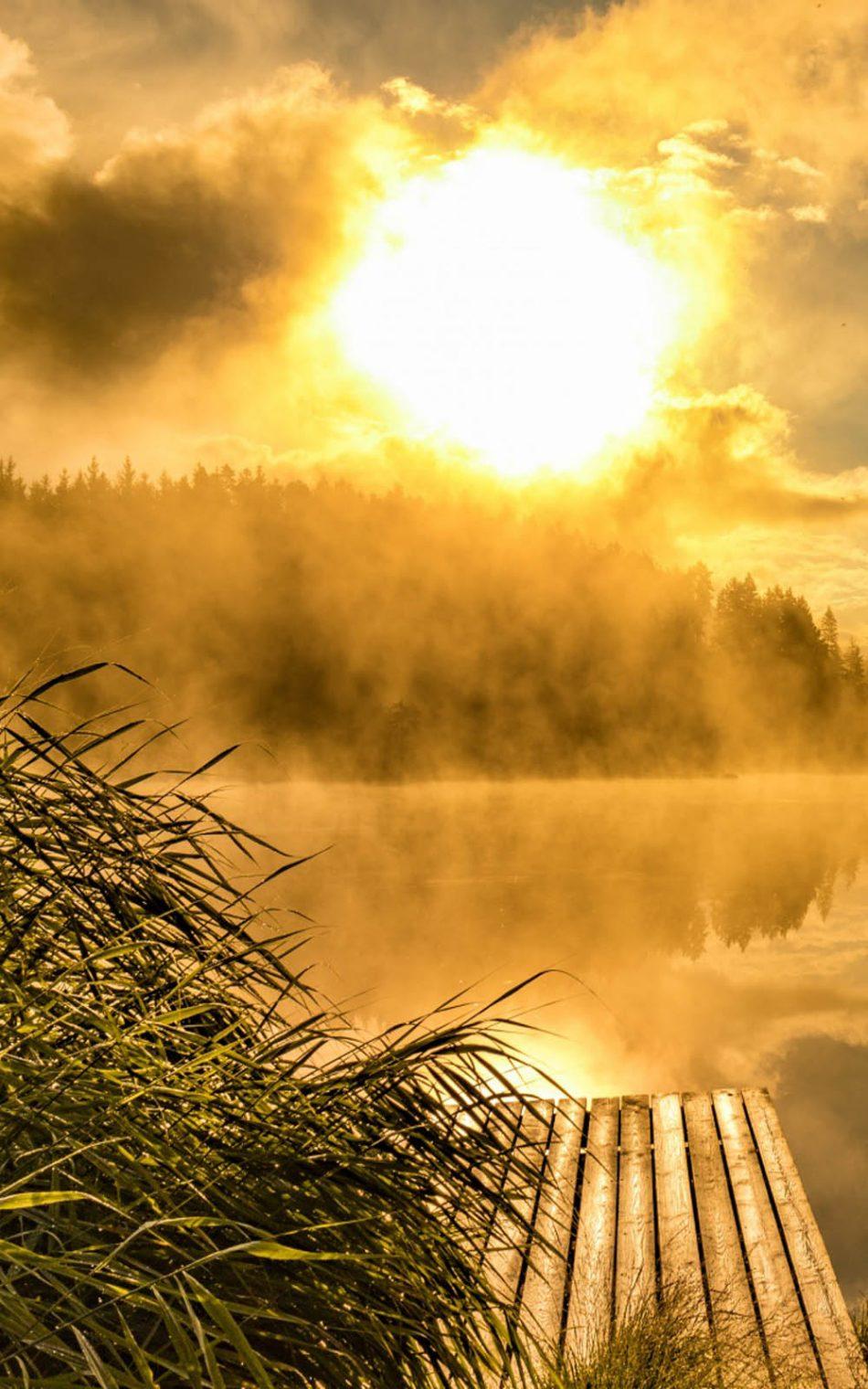 download foggy golden sunrise