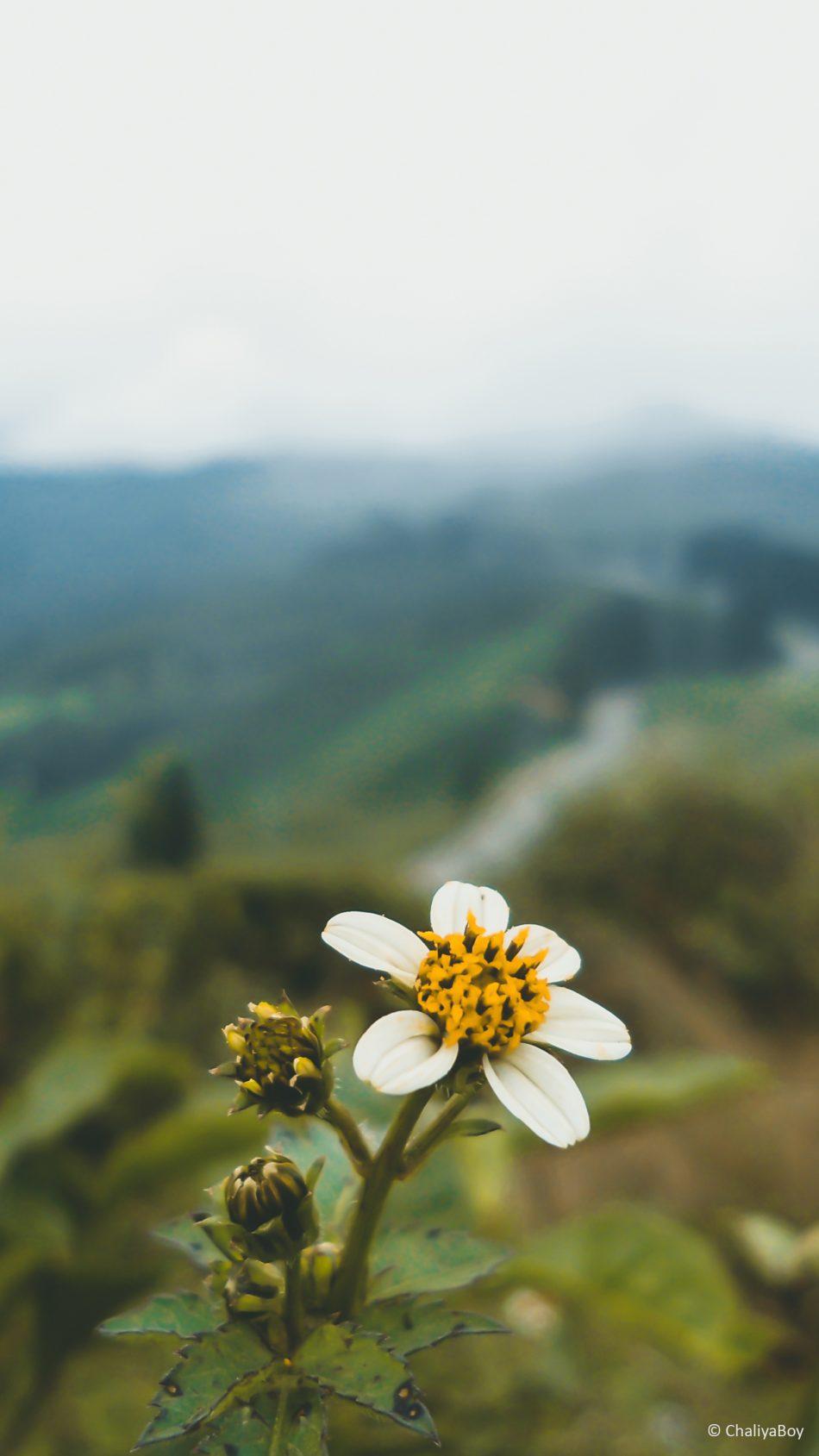download flower nature landscape