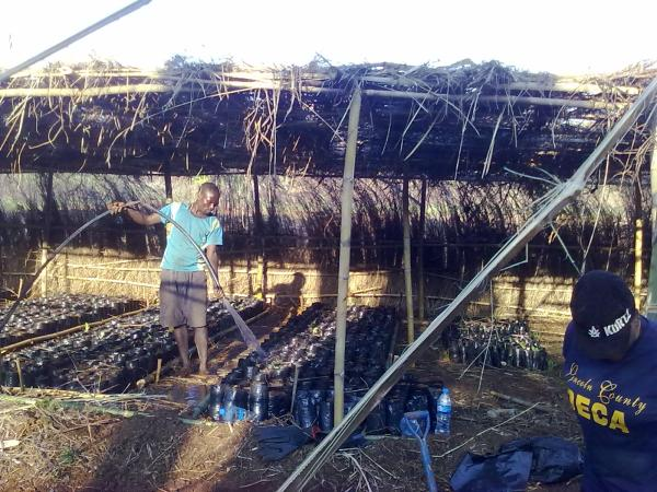 Kitenge watering the grow bags