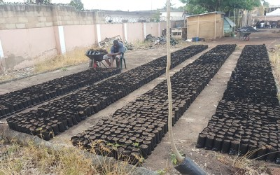 The MORE Foundation Group has started another 40,000 trees nursery in Accra as part of The One Million Trees Project.