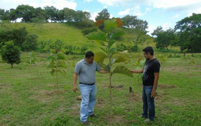 Plantations in San Esteban, Olancho Honduras