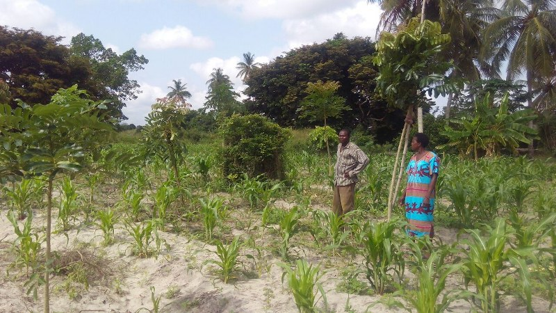 mensah-and-wife-looking-at-their-trees-good-work