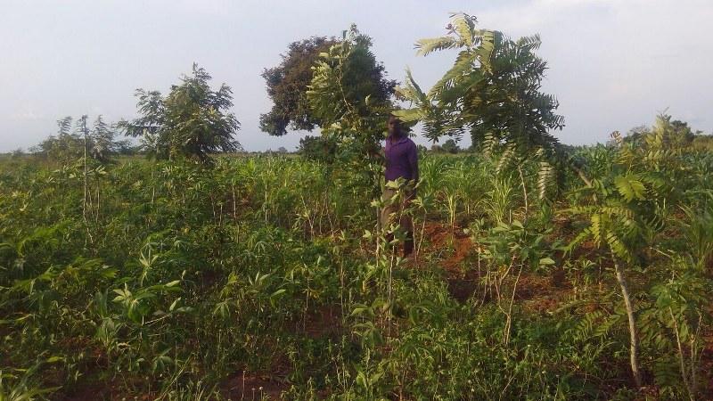 mixed-trees-on-farm