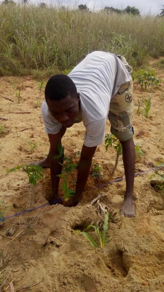 mr-detsikey-planting-his-tree
