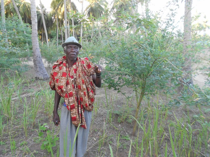 WILLIAM HOLDING FRUIT ON PIGEON PEAS