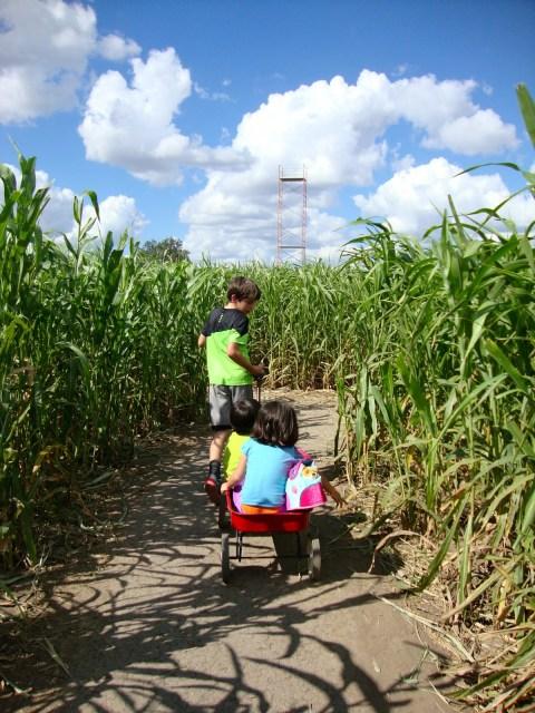 corn maze near San Antonio, Texas