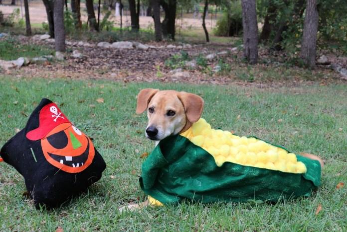 corn dog costume DIY