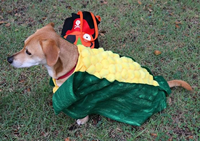 make a corn dog pet costume
