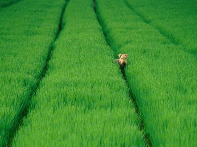 Green-grass-in-field-free-desktop-background-free-wallpaper-image