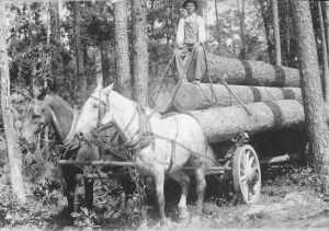 2_horse_logging_team
