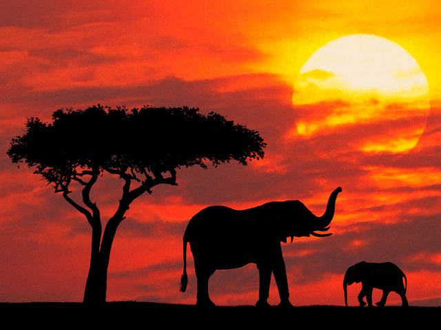 mother and baby silhouetted at sunrise kenya pictures