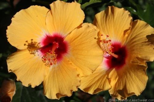 flowers 008.2