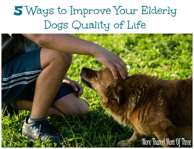 5 Ways to Improve Your Elderly Dogs Quality of Life