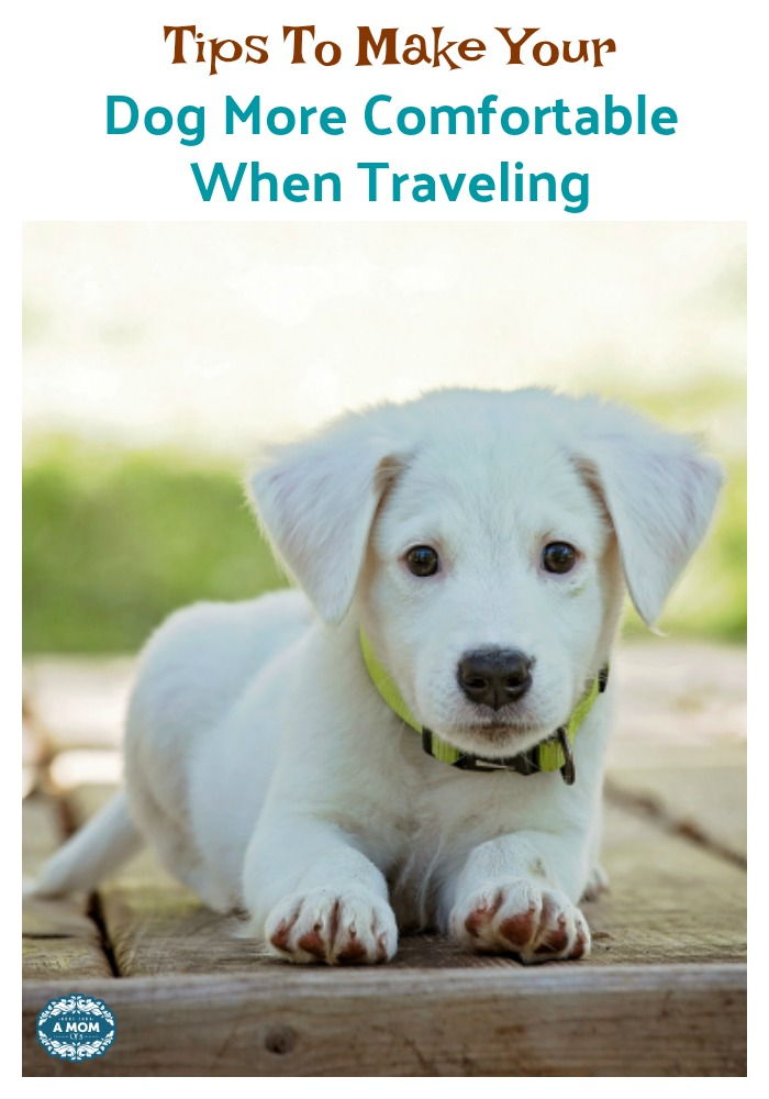 How To Make Your Dog More Comfortable While Traveling
