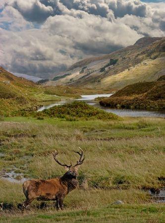 Scotland Portrait  Aston Series