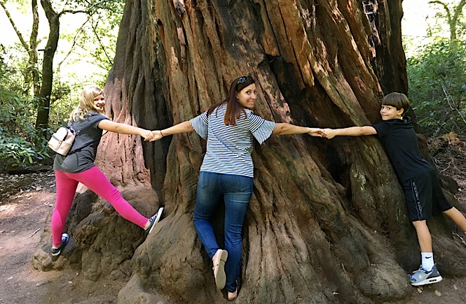Why the Best Trips in California Include a Stop to See the Redwoods, via More Than Main Street on #TheWeeklyPostcard