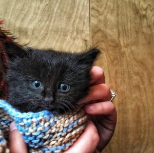 black kitten wrapped in a blue and beige blanket, in front of a plywood wall