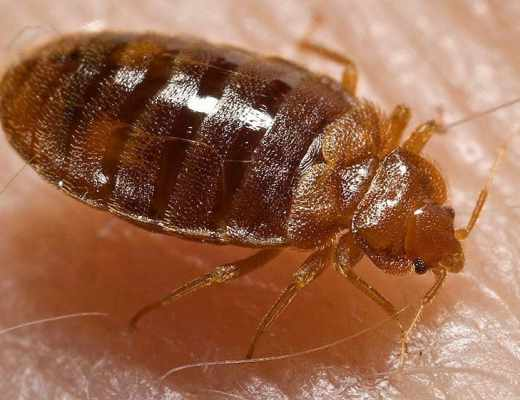 Hotel bedbugs can be a real hassle