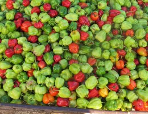 Scotch Bonnet Peppers at the Ocho Rios MarketI