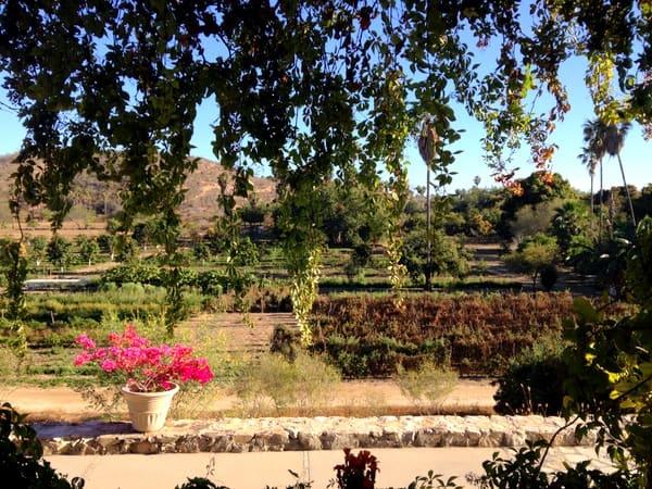Los Tamarindos Farm