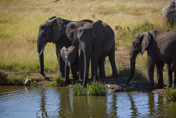 Elephants beside watering hole (Credit: Four Seasons Hotels and Resorts)