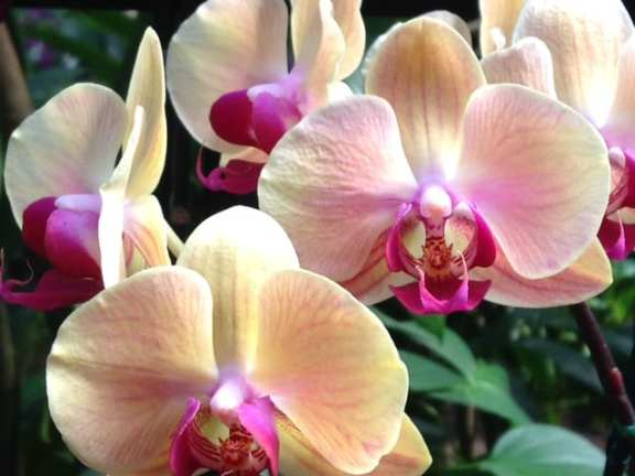 Orchids in the conservatory