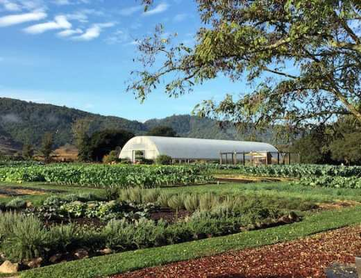 Chef Thomas Keller's Organic Farm in Yountville (Credit: Jerome Levine)