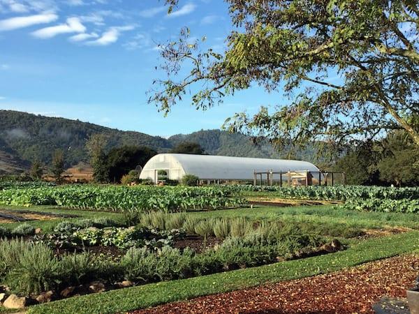 Chef Thomas Keller's Organic Farm in Yountville (Credit: Jerome Levine)