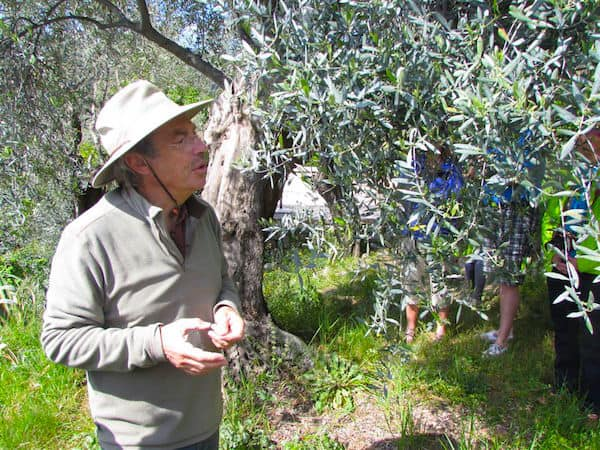 Olive Farmer (Credit: John and Sandra Nowlan)