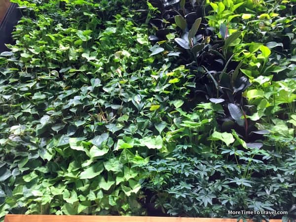 Living Wall inside the entrance
