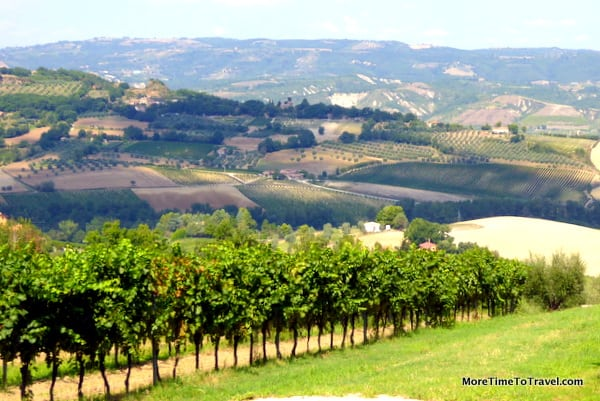 View of the hills through the vineyards