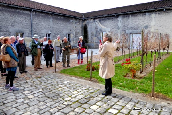 Our guide shows the three types of grapes harvested for cognac