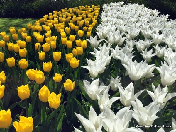 Tulips and other flowers at Keukenhof Gardens