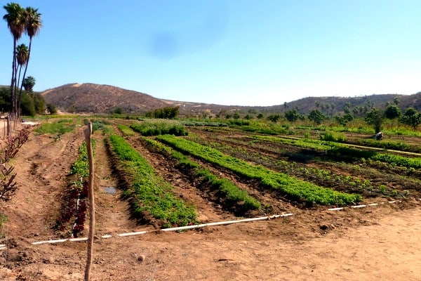 Fertile fields at Huerta Los Tamarindos (photo credit: Jerome Levine).