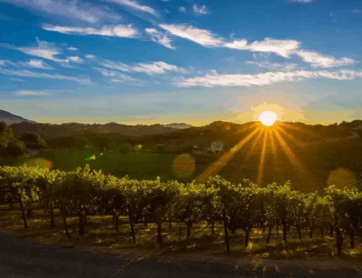 Summer Vineyards (Photo credit: Bob McClenahan for Visit Napa Valley